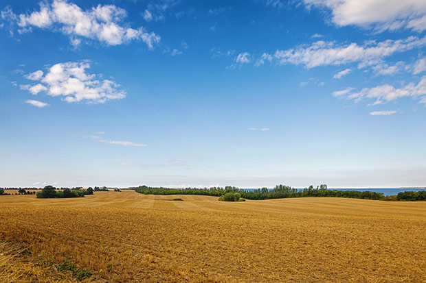 field-1714592