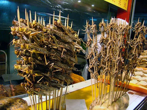 insetti,cucina a base di insetti