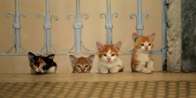 """""""Kedi. La città dei gatti"""", oggi e domani all'UCI Cinemas Red Carpet"""