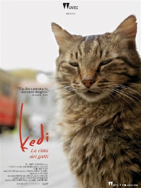 Kedi-La-città-dei-gatti