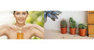 olio di cactus