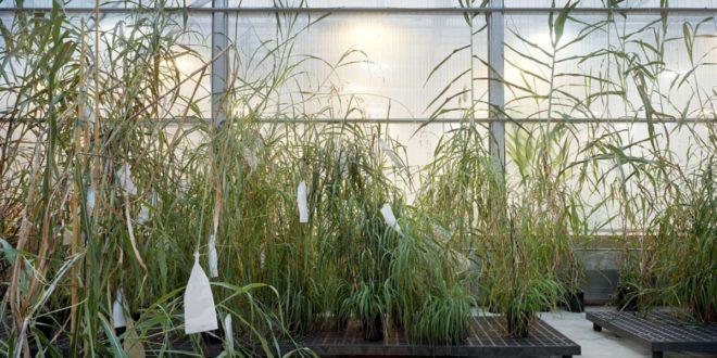 """La Fondazione MAST ospita la mostra """"Thomas Struth: Nature & Politics"""""""
