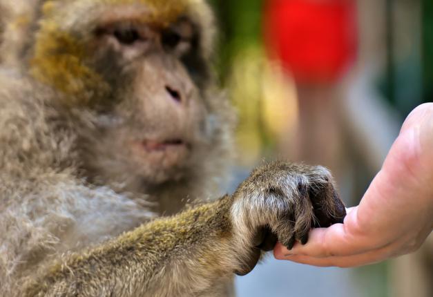Macaco, empatia